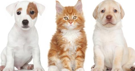 Aceptamos mascotas Casa Santa Mónica